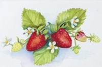 Strawberry Patch - F. Berry Border Fine Art Print