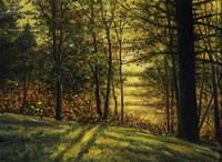 Autumn Light Fine Art Print