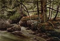 Forest Intrigue Fine Art Print