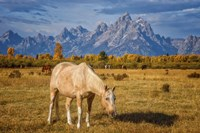 Breakfast in the Tetons Fine Art Print