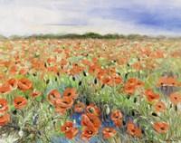 Blooming Poppy 3 Fine Art Print