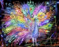 Peacock Nexsus Fine Art Print