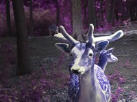 Purple Deer Fine Art Print