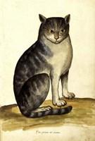 Felis Syriacus Ulisse Aldrovani (1522 -1605) Fine Art Print