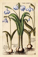 Matthaeus Merian Narcissus-Early16s Fine Art Print