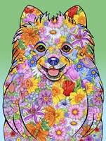 Flowers Pomeranian Fine Art Print