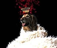 Royal Love Pup - Golden Retriever Framed Print