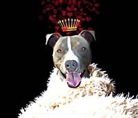 Royal Love Pup - Pit Bull Terrier Framed Print