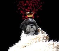 Royal Love Pup - Shi Tzu Fine Art Print