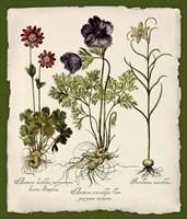 Botanica Nostalgia II Fine Art Print