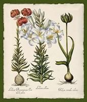 Botanica Nostalgia III Fine Art Print