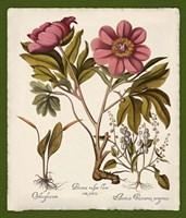 Botanica Nostalgia IV Fine Art Print