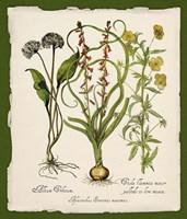 Botanica Nostalgia Fine Art Print