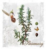 Botanical Garden Rosemary Herb Fine Art Print