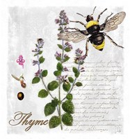 Botanical Garden Thyme Herb Fine Art Print