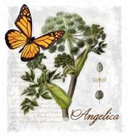 Botanical Gardern Angelica Herb Fine Art Print