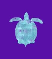 Sponge Turtle Aqua Framed Print
