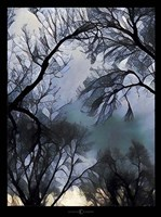 End Of Day Winter Trees Fine Art Print