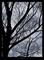 Patchwork Branches Fine Art Print