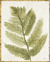 Forest Ferns I Antique Framed Print