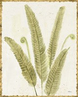 Forest Ferns II v2 Antique Fine Art Print