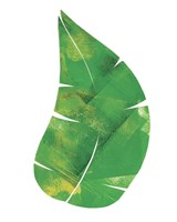 Palm Leaf 6 Fine Art Print