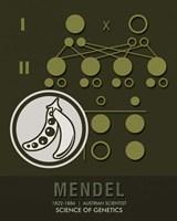 Mendel Fine Art Print