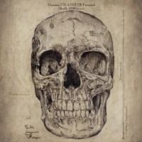 Cranium III Fine Art Print