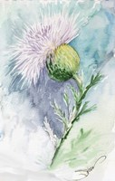 Thistle Watercolor Sketch Fine Art Print