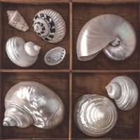 Seashells Treasures I Fine Art Print