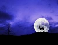 Big Moon Fine Art Print
