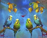 Color Birds Fine Art Print