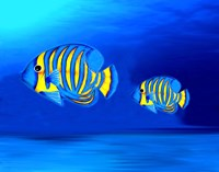 Colorful Fishes Fine Art Print