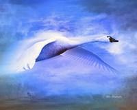Swan Fly Fine Art Print