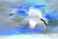 White Swan Fly Fine Art Print