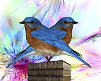 Twin Blue Bird Fine Art Print