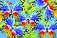 Butterflies 44 Fine Art Print
