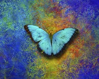 Color and butterfly 1 Fine Art Print