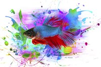 Fish and colors Fine Art Print