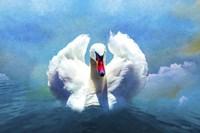 Beautiful Swan Fine Art Print