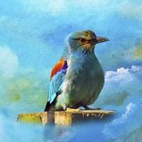 Blue Bird 2A Fine Art Print