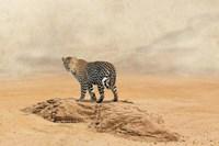 The Leopard 2 Fine Art Print