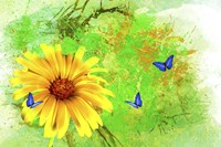 Yellow Flower And Butterflies Fine Art Print