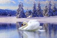 Swan Winter Fine Art Print