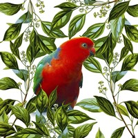 Bird Collection 18 Fine Art Print