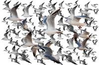 Bird Collection 35 Fine Art Print