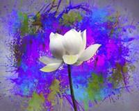 Flowers Explosion SEP3 Fine Art Print