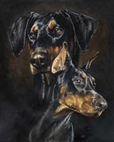 Doberman Pinscher Fine Art Print