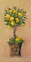 Potted Lemons Fine Art Print
