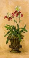 Orchid Revival II Fine Art Print